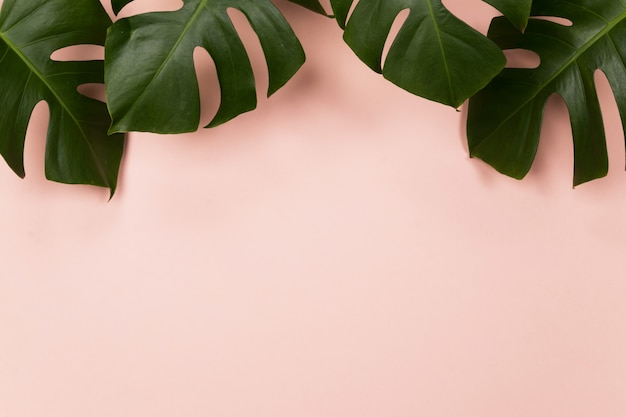 Tropical palm leaf on pink background