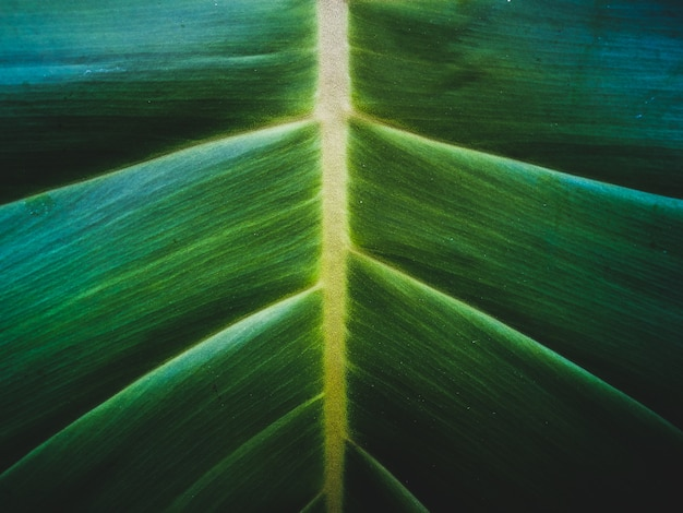 Tropical palm leaf texture, close up of large foliage, nature background