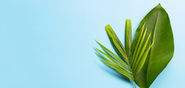 Tropical palm leaf with banana leave on blue