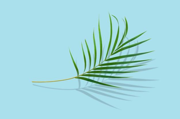 Тропический пальмовый лист с тенью на пастельно-синем цветном фоне
