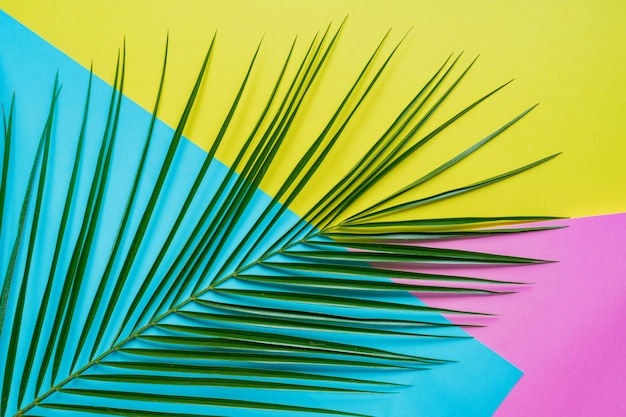 Tropical palm leaf with shadows on blue, pink and yellow background.