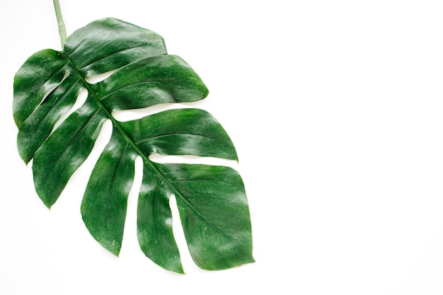 熱帯のヤシの葉