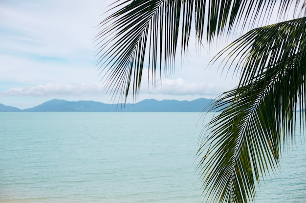 열대 야자 잎, 바다 및 열대 섬. 여름 휴가 개념
