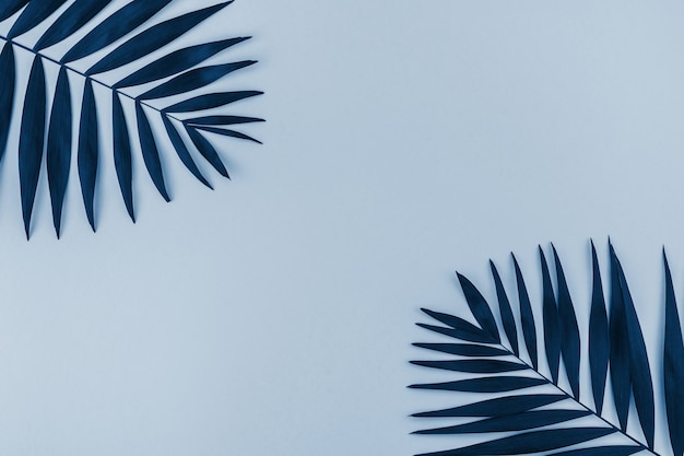 Tropical palm leaves background blue toned
