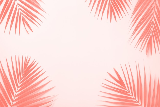 Tropical palm leaves background. minimal summer concept.