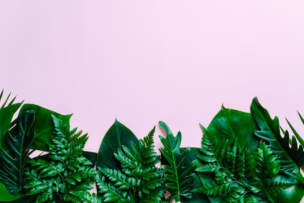 Tropical palm leaves background with copy space