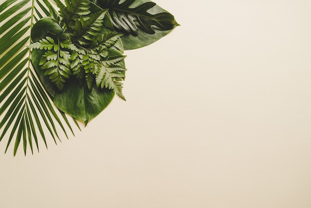 Tropical palm leaves on beige background