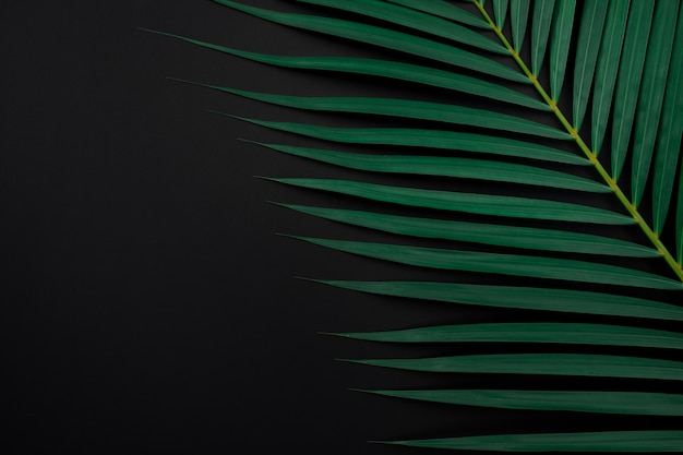 Tropical palm leaves on black color background.