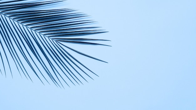 Tropical palm leaves on blue background. tropical palm leaves top view or flat lay.