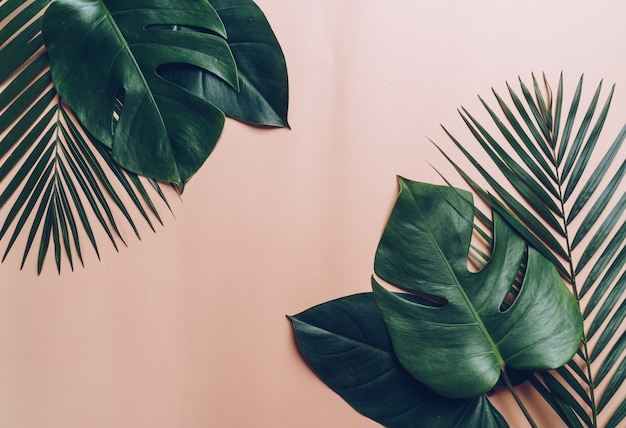 Tropical palm leaves on color background with copyspace