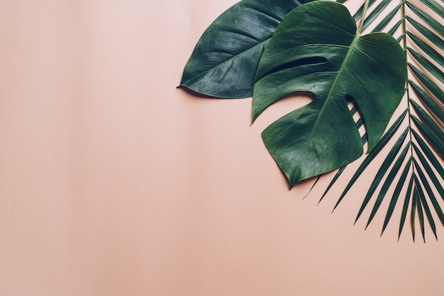 Tropical palm leaves on color background
