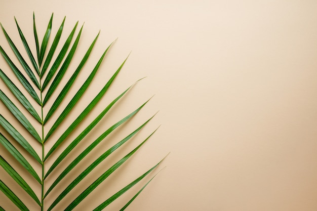 Tropical palm leaves on color . summer .