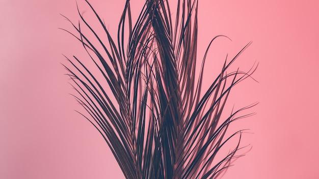 熱帯のヤシの葉。花のミニマリスト