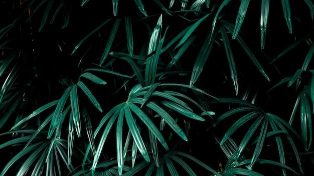 庭の熱帯のヤシの葉