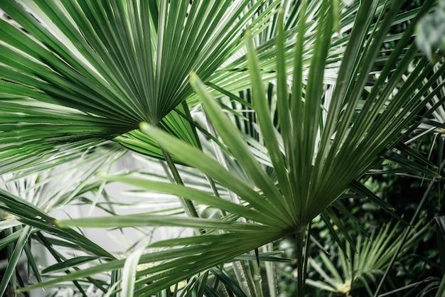 열대 야자수 잎 무성한 녹색 단풍 배경 여름 해변 배경