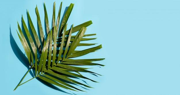 Тропические пальмовые листья на синем фоне. наслаждайтесь концепцией летнего отдыха.