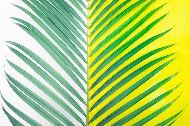カラフルな背景に熱帯のヤシの葉