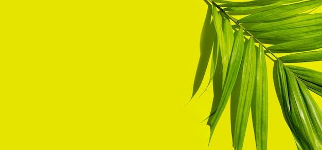 Тропические пальмовые листья на зеленом фоне. летний фон концепция