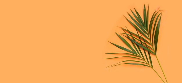 Тропические пальмовые листья на оранжевом фоне. летний фон концепция