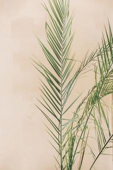 淡いパステル ベージュの背景に熱帯のヤシの葉