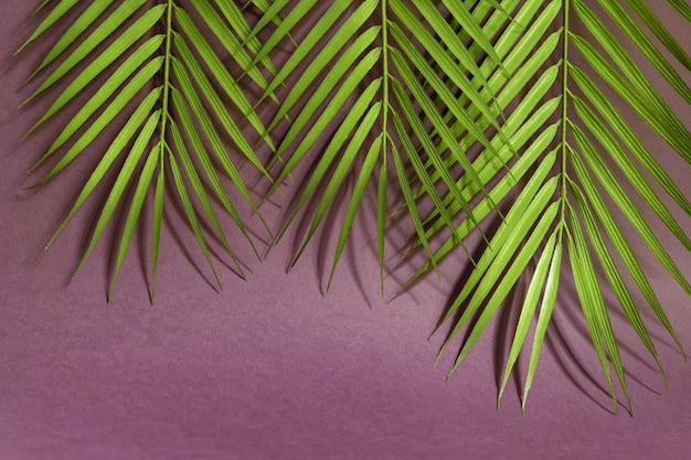 ピンクの背景に熱帯のヤシを葉します。最小限の夏のコンセプト。創造的なフラットコピースペースを置きます。