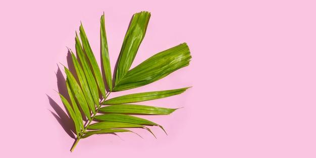 Тропические пальмовые листья на розовом фоне. летний фон концепция