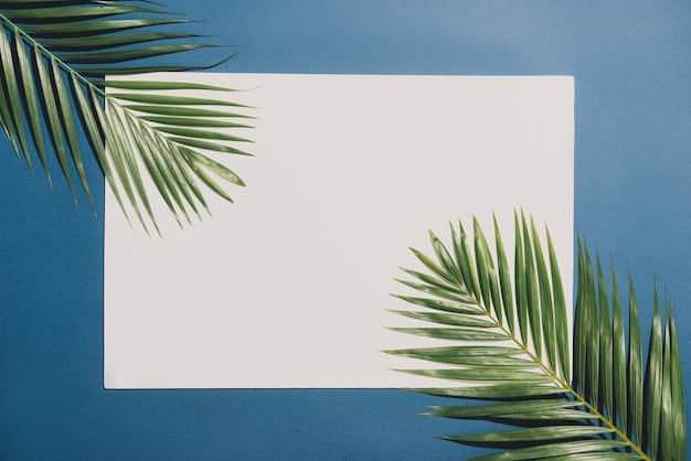 白い背景に青い境界線を持つ熱帯のヤシの葉。最小限の性質。夏スタイル。平置き。