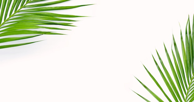 Тропические пальмовые листья на белой поверхности. фон концепция