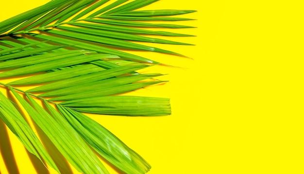 Тропические пальмовые листья на желтом фоне. летний фон концепция