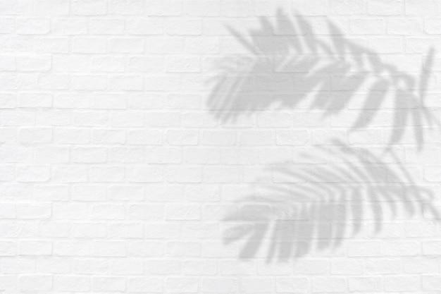 Тропическая ладонь выходит тени завода орнаментальной листвы на белую предпосылку текстуры кирпичной стены.