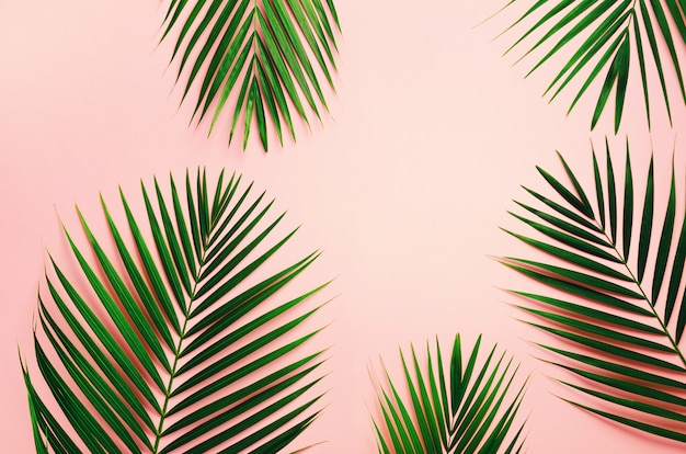 Tropical palm leaves on pastel pink background. minimal summer concept.