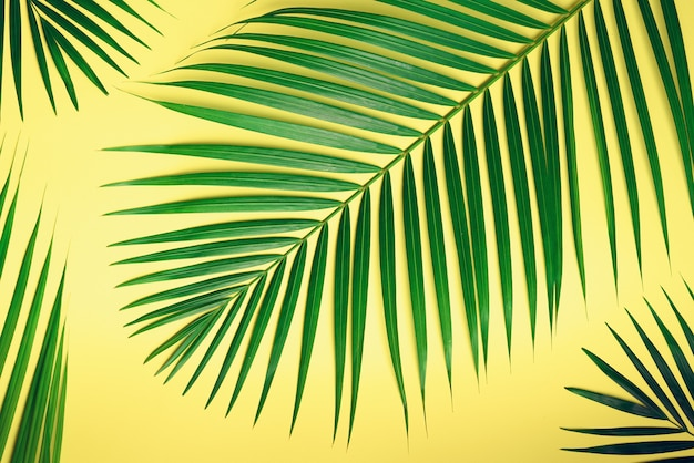 Tropical palm leaves on pastel yellow background. minimal summer concept. top view green leaf on punchy pastel paper