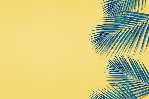 Tropical palm leaves pattern with copy space on pastel color background.