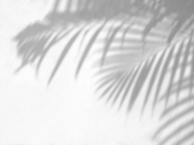 熱帯のヤシは、写真のモックアップポスター静止壁アートデザインプレゼンテーションの白い壁の背景オーバーレイ効果に影を残します