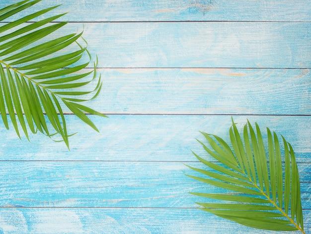 Тропические пальмовые листья, концепция летнего отдыха.