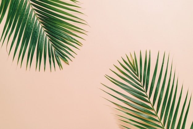 Tropical palm leaves top view