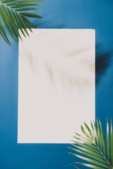Tropical palm leaves on white background with blue border. minimal nature. summer styled. flat lay.