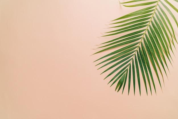 Тропические пальмовые листья с копией пространства