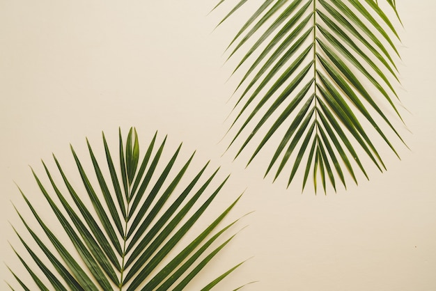 コピースペースを持つ熱帯のヤシの葉