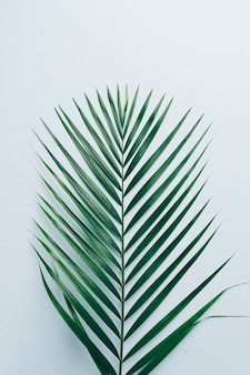 Tropical palm leaves with copy space
