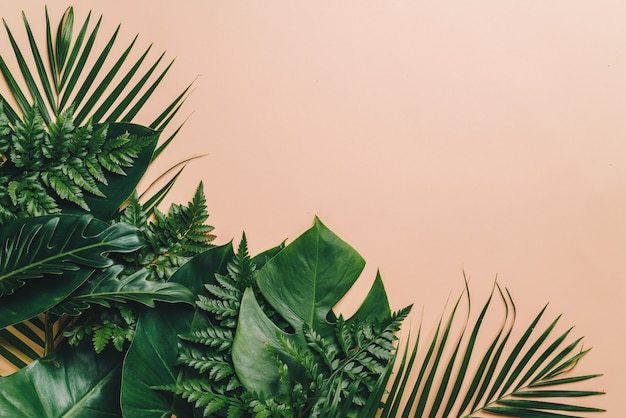 Tropical palm leaves with copyspace background