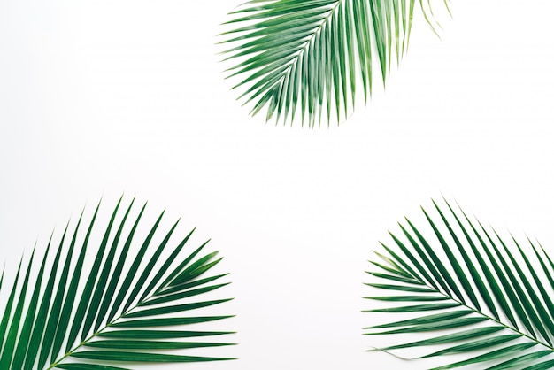 Tropical palm leaves with copyspace white background