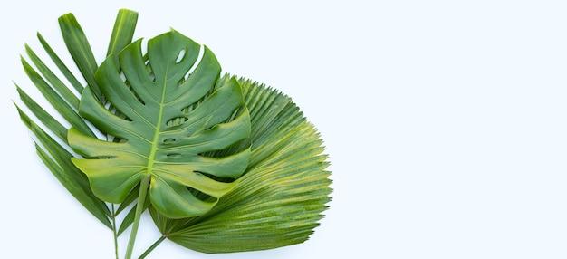 흰색 표면에 몬스 테라 식물 잎과 열 대 야자수 잎