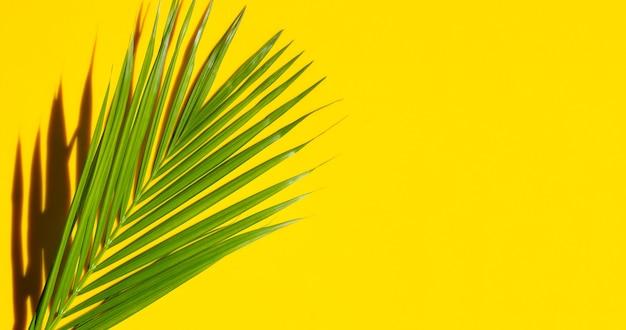 黄色の背景に影のある熱帯のヤシの葉。