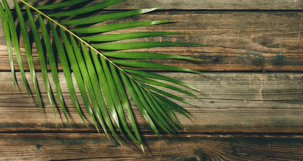 Tropical palm leaves on wood background. summer concept.
