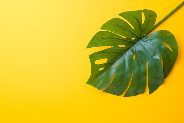 Tropical palm leaves on yellow background with copy space
