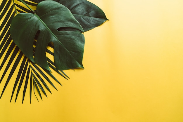 Tropical palm leaves on yellow background with copyspace
