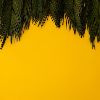 Tropical palm leaves on yellow
