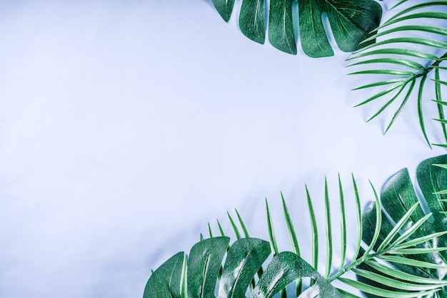 Tropical palm and monstera leaves background