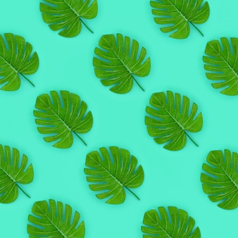 Tropical palm monstera leaves lies on a pastel colored paper